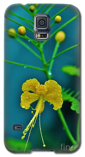 Galaxy S5 Case featuring the photograph Yellow And Delicate  by Craig Wood