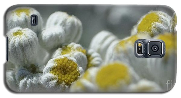 Yellow And Gray Buds 2 Galaxy S5 Case
