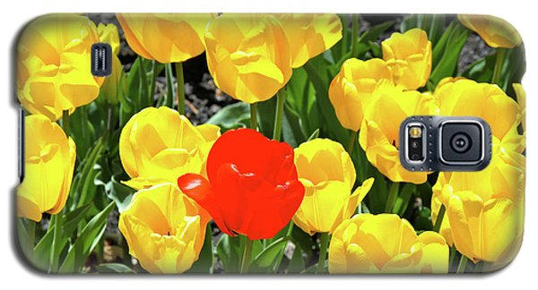 Yellow And One Red Tulip Galaxy S5 Case
