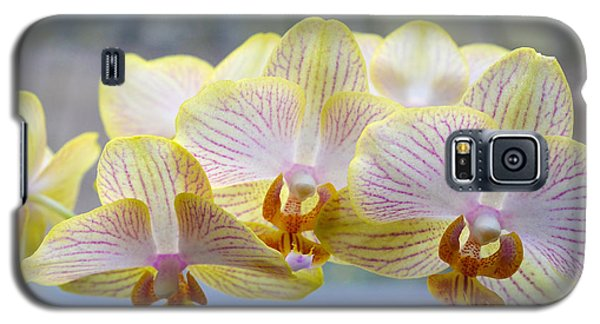 Yellow And Pink Orchids Galaxy S5 Case