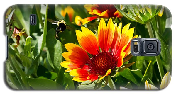Yellow And Red Gaillardias And Bee Galaxy S5 Case