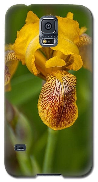 Yellow Bearded Iris Galaxy S5 Case by Brenda Jacobs