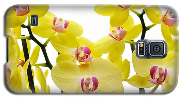 Yellow Beauties Galaxy S5 Case