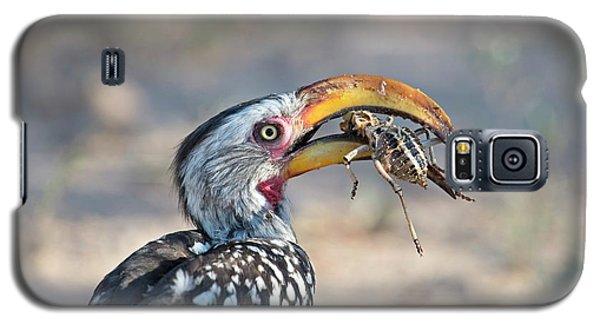 Yellow-billed Hornbill Eating A Cricket Galaxy S5 Case