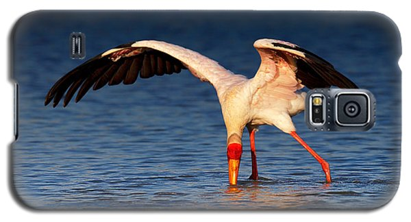 Yellow-billed Stork Hunting For Food Galaxy S5 Case by Johan Swanepoel