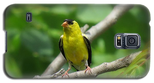 Yellow Bird Galaxy S5 Case by France Laliberte