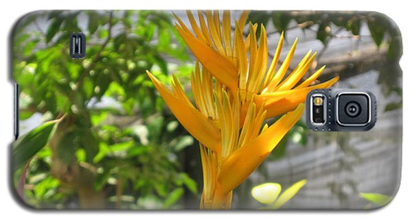 Yellow Bird Of Paradise Galaxy S5 Case