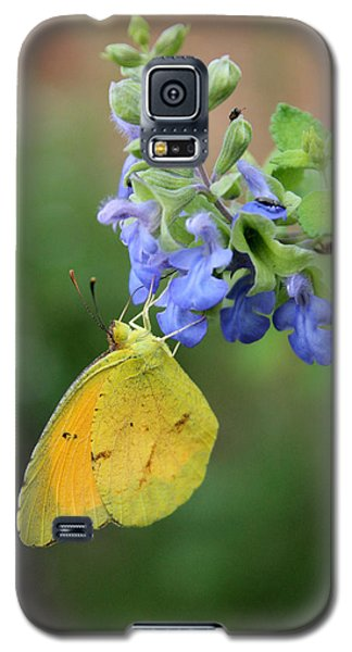 Yellow Butterfly On Blue Sage Galaxy S5 Case