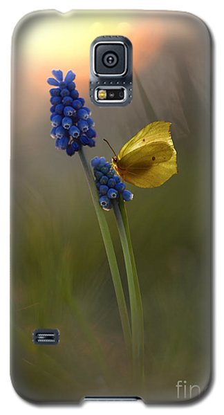 Yellow Butterfly On Grape Hyacinths Galaxy S5 Case