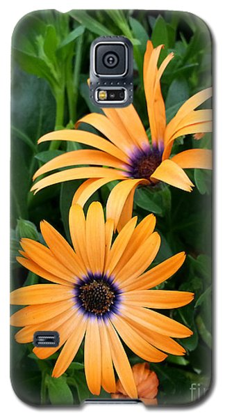 Yellow Cape Daisy Galaxy S5 Case