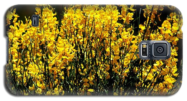 Galaxy S5 Case featuring the photograph Yellow Cluster Flowers by Matt Harang