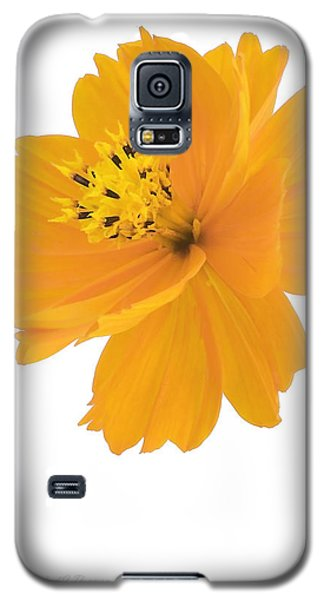 Yellow Coreopsis Galaxy S5 Case