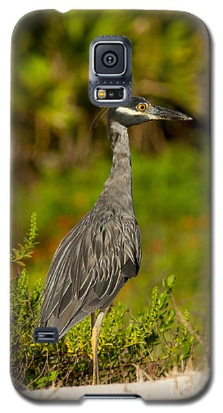Yellow Crowned Night Heron Dune Watch Galaxy S5 Case