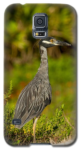 Yellow Crowned Night Heron Dune Watch Galaxy S5 Case