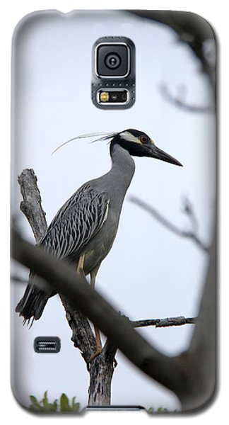 Galaxy S5 Case featuring the photograph Yellow Crowned Night Heron by Marta Alfred