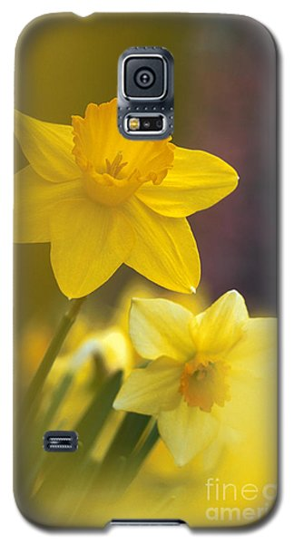 Galaxy S5 Case featuring the photograph Yellow Daffodils  by Chris Scroggins