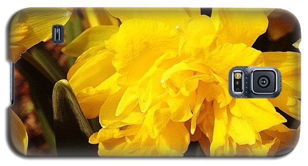 Bright Galaxy S5 Case - Yellow Daffodils by Christy Beckwith