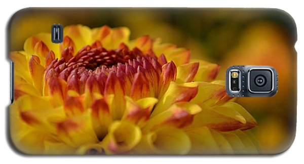 Yellow Dahlia Red Tips Galaxy S5 Case