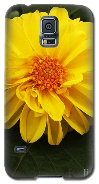 Yellow Dahlias Galaxy S5 Case by Deborah Fay