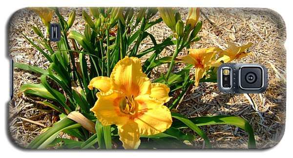 Galaxy S5 Case featuring the photograph Yellow Daylily by Deborah DeLaBarre