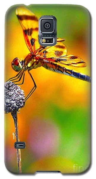 Galaxy S5 Case featuring the photograph Yellow Dragon by Adam Olsen