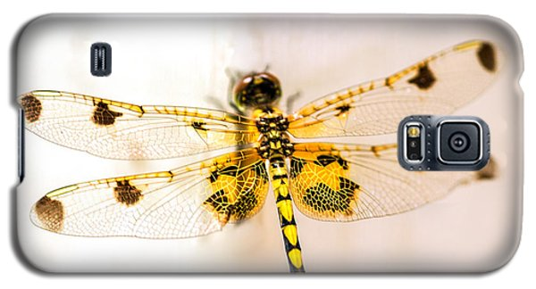 Yellow Dragonfly Pantala Flavescens Galaxy S5 Case by Iris Richardson