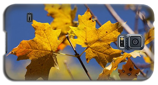 Yellow Fall Leaves Galaxy S5 Case
