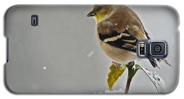 Galaxy S5 Case featuring the photograph Yellow Finch by Denise Romano