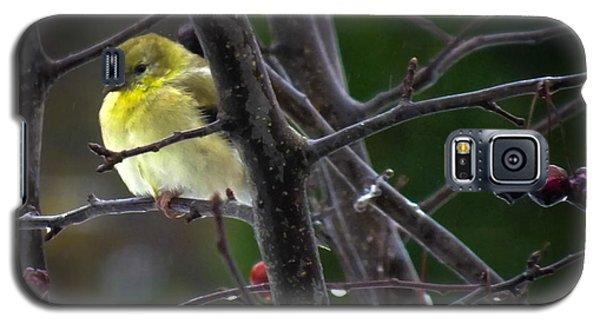Finch Galaxy S5 Case - Yellow Finch by Karen Wiles