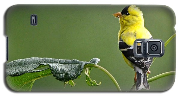 Galaxy S5 Case featuring the photograph Yellow Finch by Nava Thompson