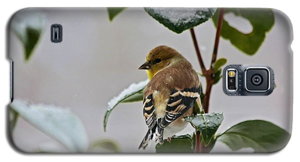 Galaxy S5 Case featuring the photograph Yellow Finch On Branch by Denise Romano