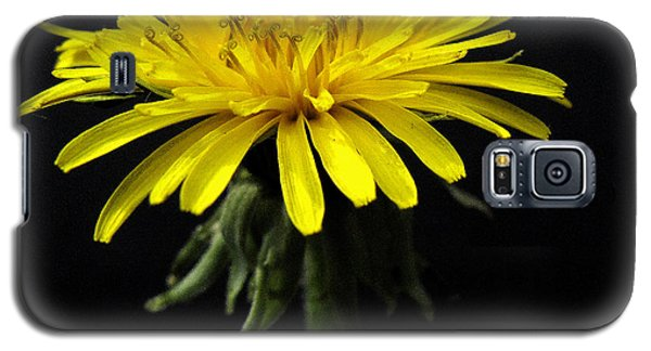 Yellow Flower Galaxy S5 Case by Dorin Adrian Berbier