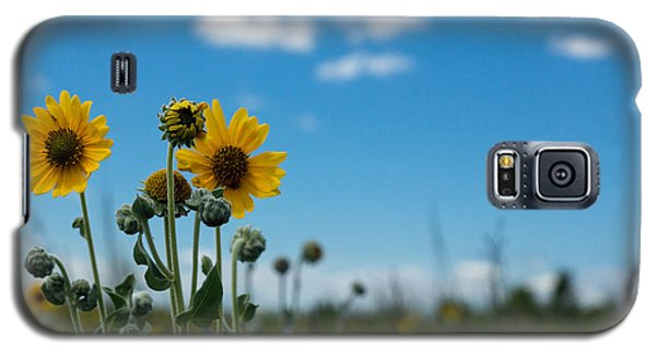 Yellow Flower On Blue Sky Galaxy S5 Case