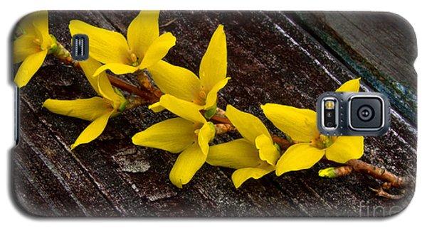 Yellow Forsythia Galaxy S5 Case