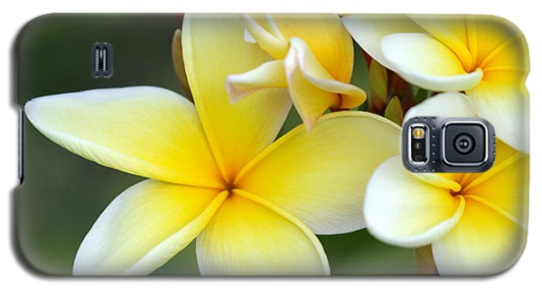 Yellow Frangipani Flowers Galaxy S5 Case