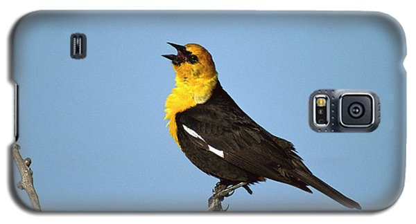 Yellow-headed Blackbird Singing Galaxy S5 Case by Tom Vezo