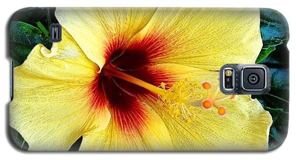 Yellow Hibiscus 2 Galaxy S5 Case by Darice Machel McGuire