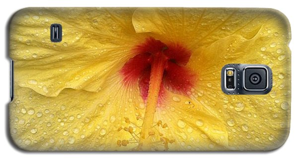 Galaxy S5 Case featuring the photograph Yellow Hibiscus In The Rain by Alohi Fujimoto