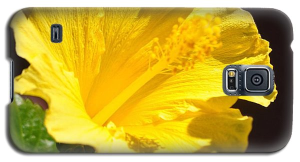 Yellow Hibiscus Open To The Sun Galaxy S5 Case by Jay Milo