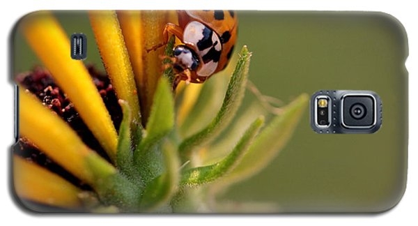 Galaxy S5 Case featuring the photograph Yellow Lady - 4 by Kenny Glotfelty