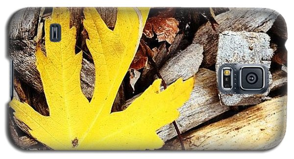 Color Galaxy S5 Case - Yellow Leaf by Christy Beckwith