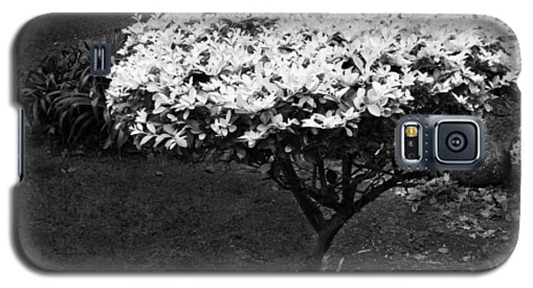 Yellow Leafed Shrub In Monochrome. Galaxy S5 Case
