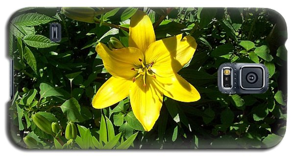 Yellow Lilly Galaxy S5 Case by Brady Harness