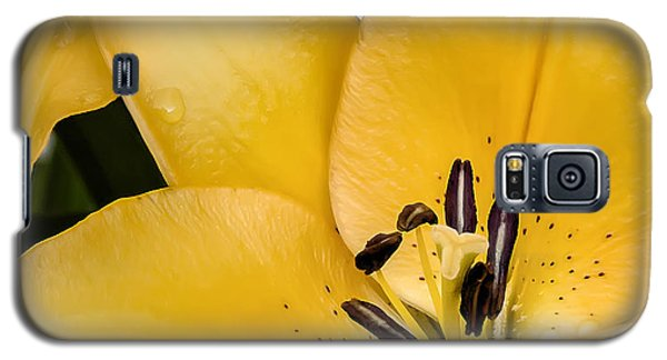 Lily Galaxy S5 Case - Yellow Lily by Scott Norris