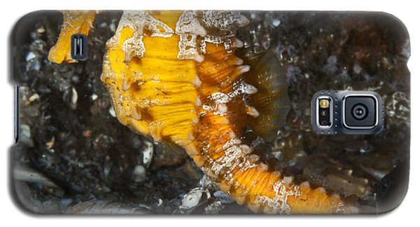 Yellow Longsnout Seahorse Galaxy S5 Case