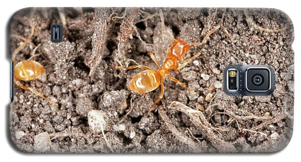 Yellow Meadow Ants Galaxy S5 Case by Bob Gibbons