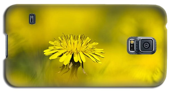Yellow On Yellow Dandelion Galaxy S5 Case
