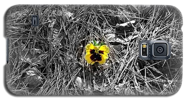 Galaxy S5 Case featuring the photograph Yellow Pansy by Tara Potts