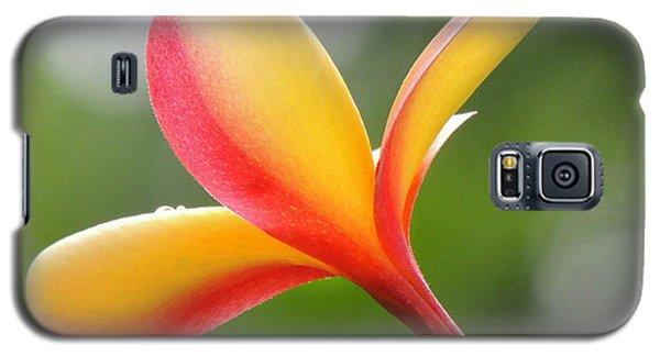 Yellow Pink Plumeria Galaxy S5 Case by Kristine Merc