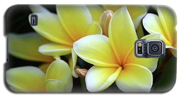 Yellow Plumeria Cascade Galaxy S5 Case